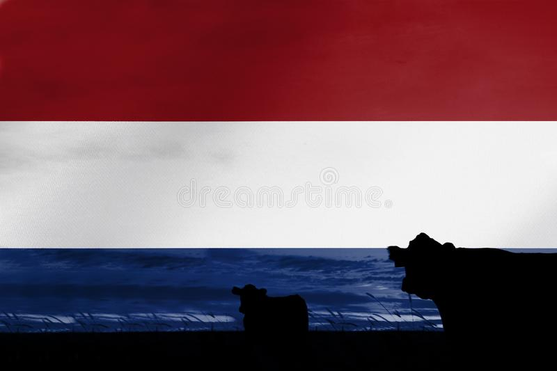 Consumption and production of cattle in countries with the flag of Netherlands.  stock image