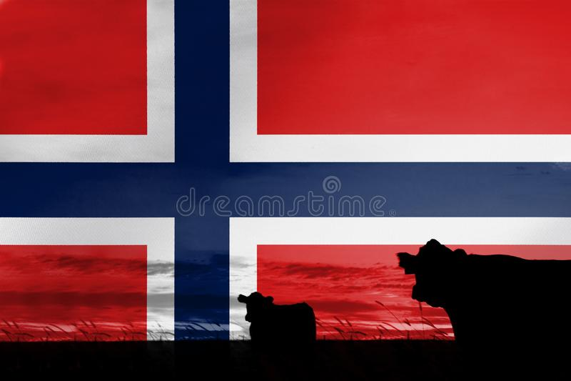 Consumption and production of cattle in countries with the flag of Norway.  stock photos
