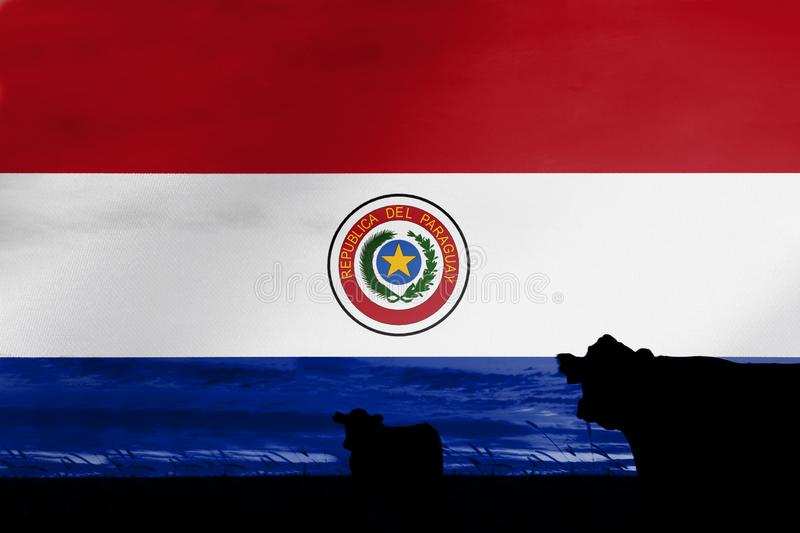 Consumption and production of cattle in countries with the flag of  Paraguay. Consumption and production of cattle in countries with the flag of Paraguay stock photo