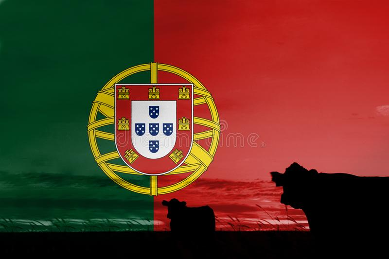 Consumption and production of cattle in countries with the flag of Portugal.  stock photos