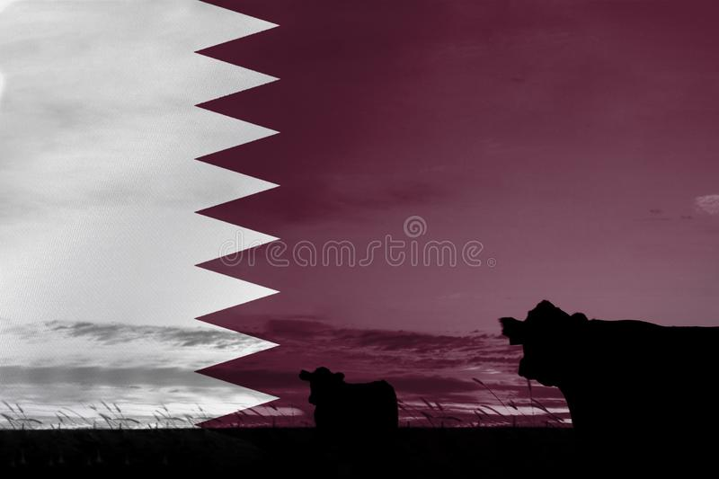 Consumption and production of cattle in countries with the flag of Qatar.  royalty free stock photography