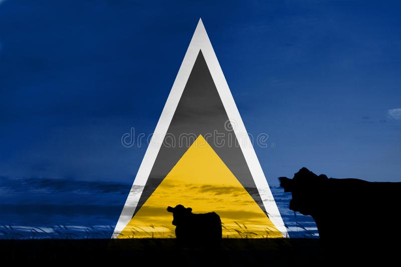 Consumption and production of cattle in countries with the flag of Saint Lucia.  royalty free stock photos