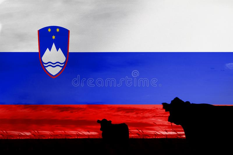 Consumption and production of cattle in countries with the flag of Slovenia.  royalty free stock photography