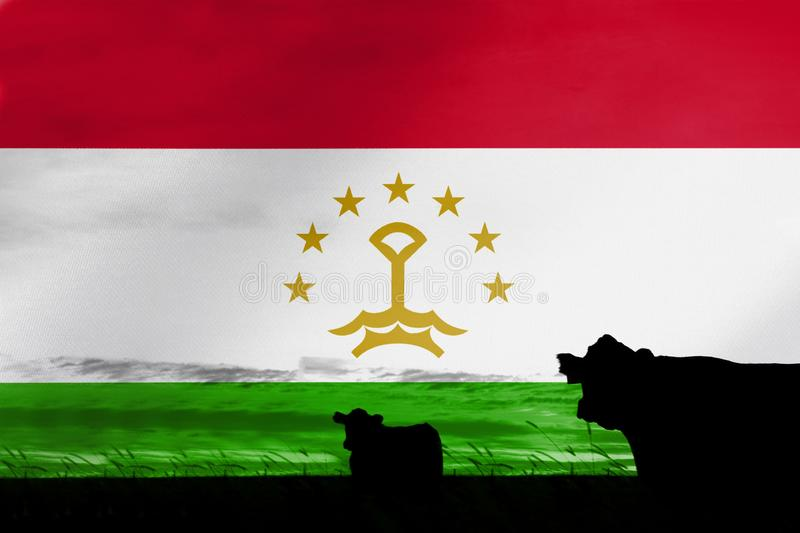 Consumption and production of cattle in countries with the flag of Tajikistan.  stock images
