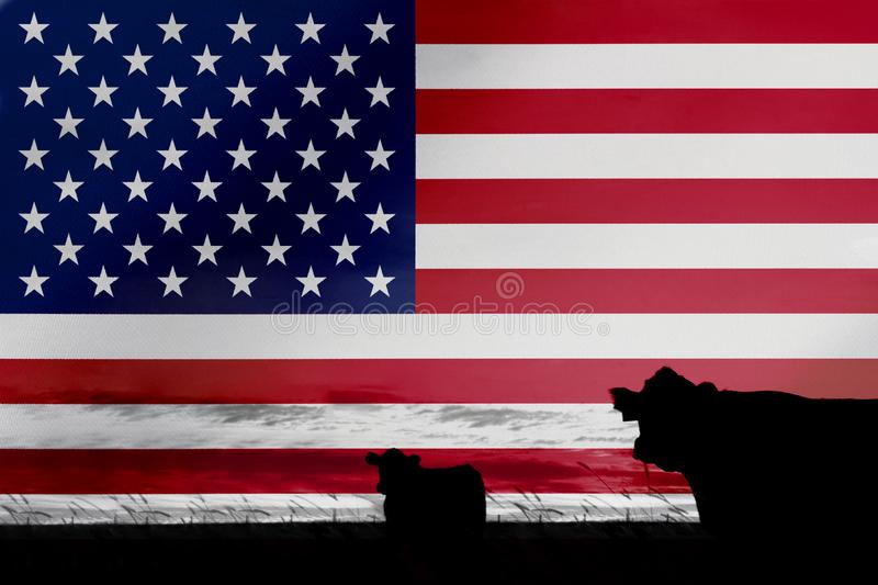 Consumption and production of cattle in countries with the flag of  United States of America.  royalty free stock photography