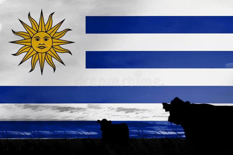 Consumption and production of cattle in countries with the flag of  Uruguay. Consumption and production of cattle in countries with the flag of Uruguay royalty free stock photos