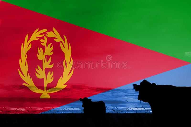 Consumption and production of cattle in countries with the flag of Western Sahara.  stock images