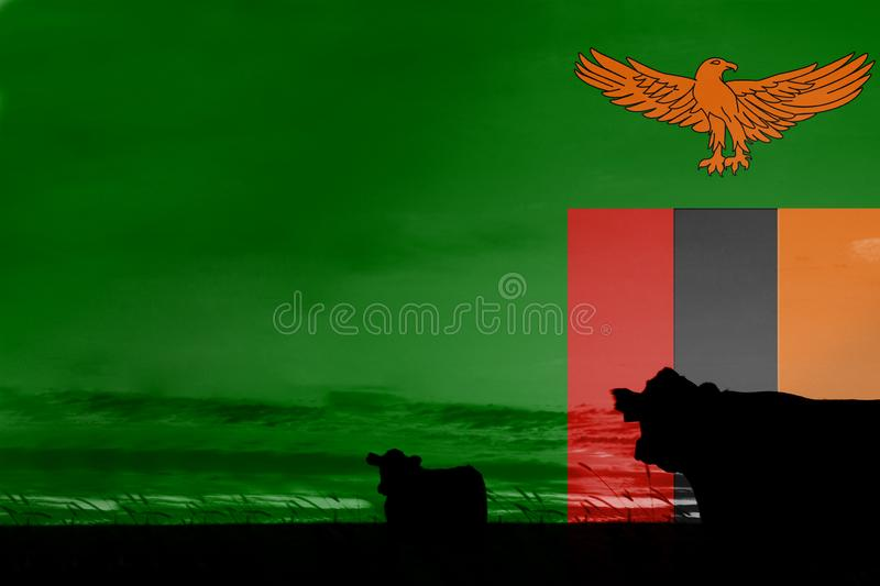 Consumption and production of cattle in countries with the flag of Zambia.  royalty free stock images