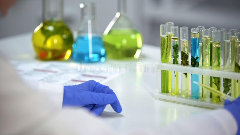 Conta-gotas da terra arrendada do técnico de laboratório com líquido amarelo oleoso, extrato da cosmetologia foto de stock