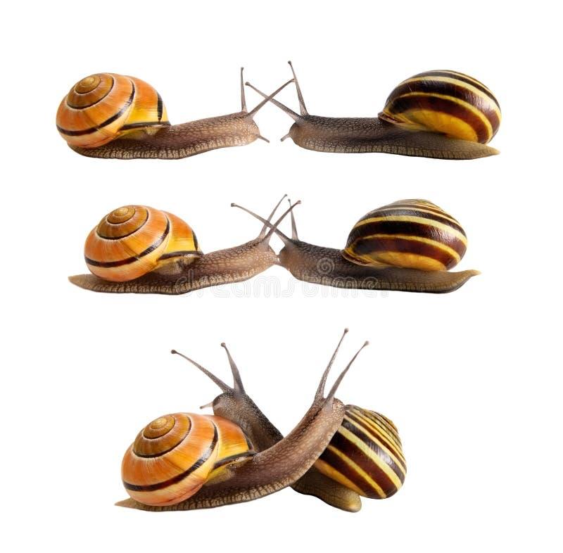 Contact de deux escargots images stock