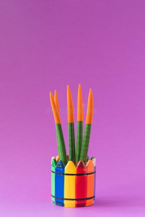 Contact de velours de Sansevieria de cactus d'isolement dans le pot coloré lumineux d'arc-en-ciel sur le fond ultra-violet photographie stock