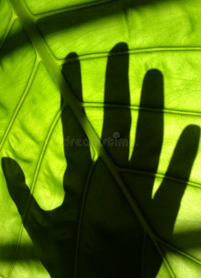 Contact vert photographie stock libre de droits
