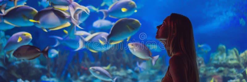 Contacts de jeune femme un poisson de pastenague dans une BANNIÈRE de tunnel d'oceanarium, LONG FORMAT photo stock