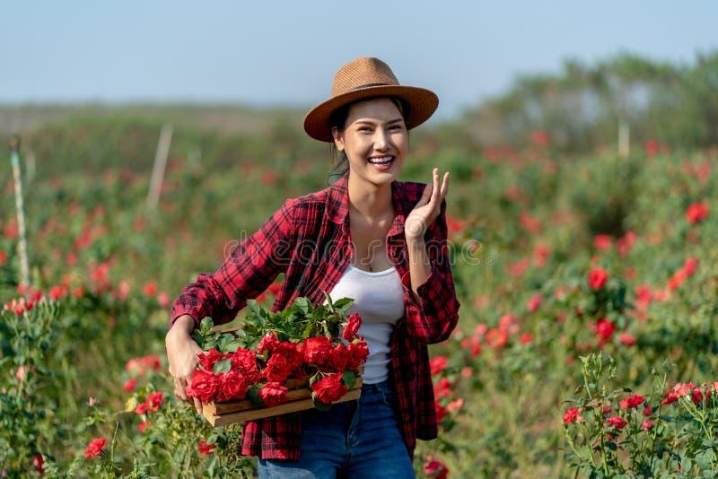 Contadina asiatica che regge il rosetto di rosa nel Rose Garden immagini stock