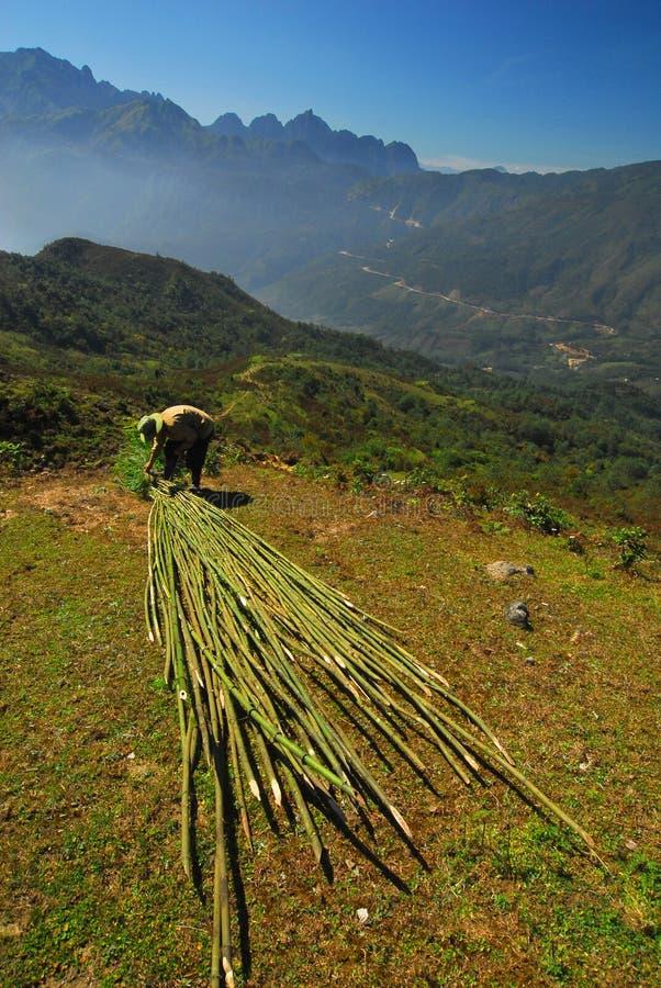 Contadino vietnamita in montagna fotografie stock