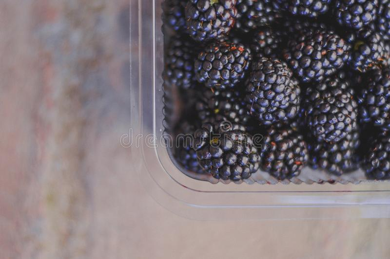Tasty fresh blackberries in plastic container in summer stock images
