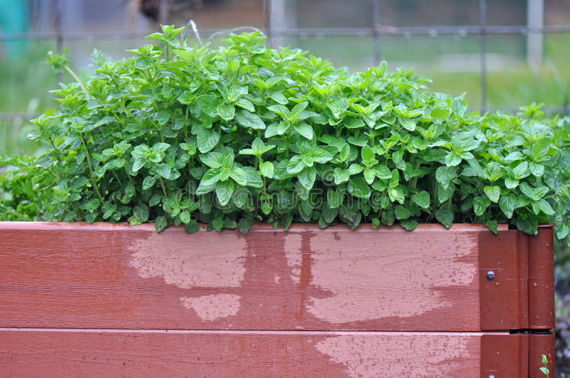 Container Garden royalty free stock photography