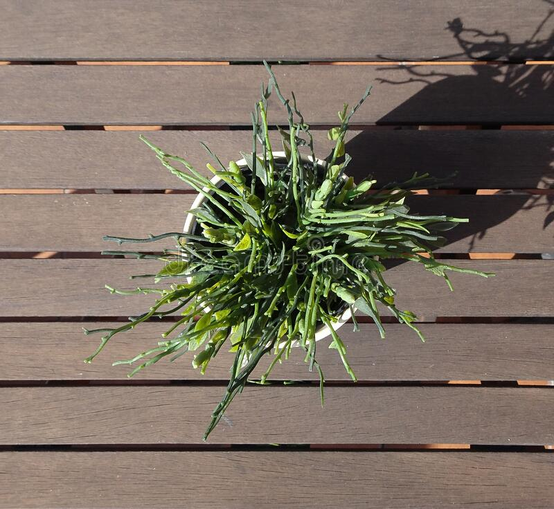 Container with green plant on brown wooden table royalty free stock photography