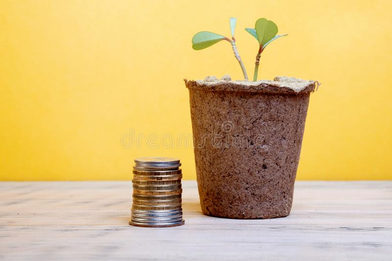 Container with a home flower nearby is a stack of metal coins. Background yellow stock photo