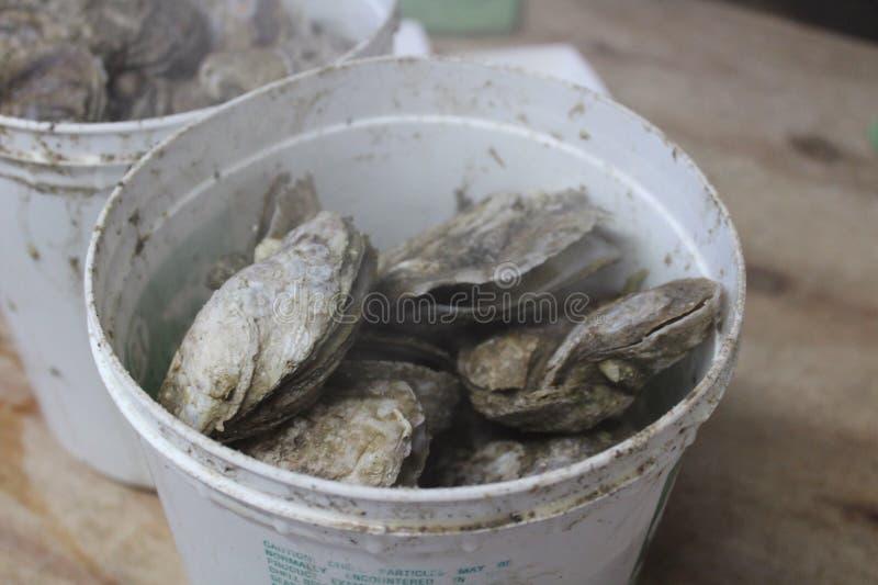 Container van oesters royalty-vrije stock foto