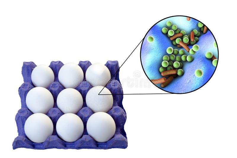 Contaminação de ovos com bactérias, conceito médico para a transmissão de infecções do alimento através dos ovos imagens de stock royalty free