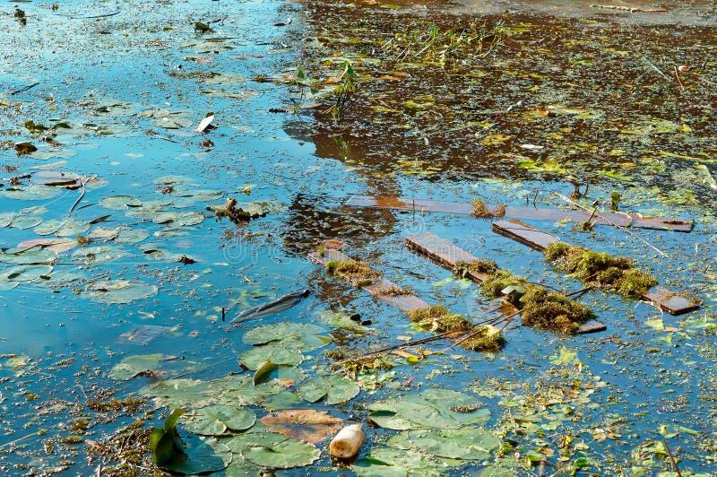 Contaminación de agua, basura en la naturaleza, contaminación del ambiente imagen de archivo libre de regalías