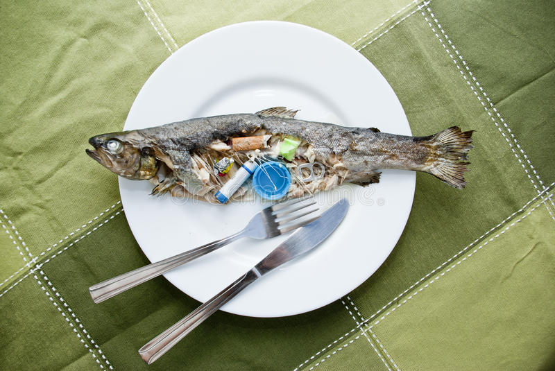 Contaminated fish. Cooked fish full of rubbish inside served on a plate, conceptual