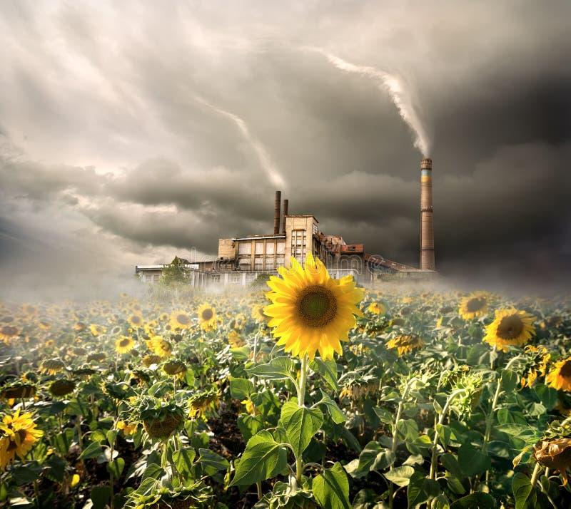 Contaminazione ambientale fotografia stock libera da diritti