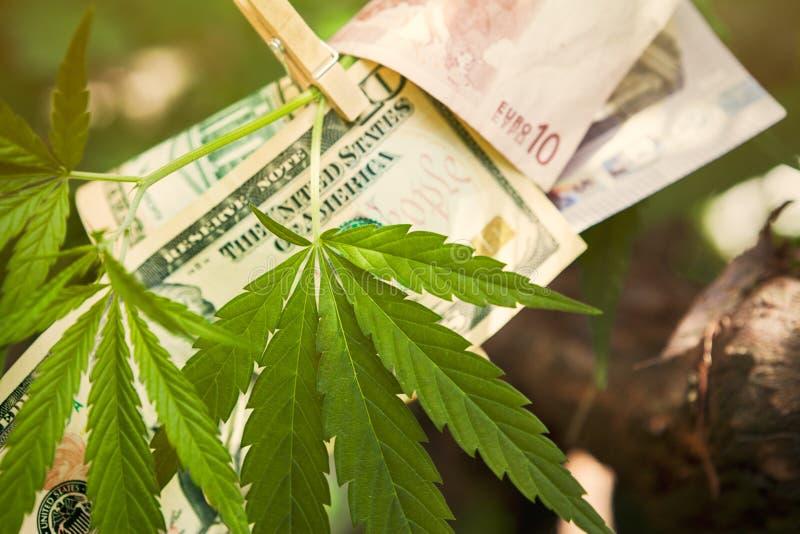 Contas do cannabis e de dinheiro no ramo imagens de stock royalty free