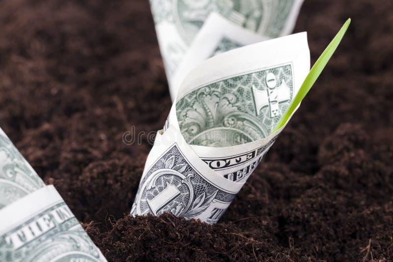 contas plantadas de um-dólar imagens de stock royalty free