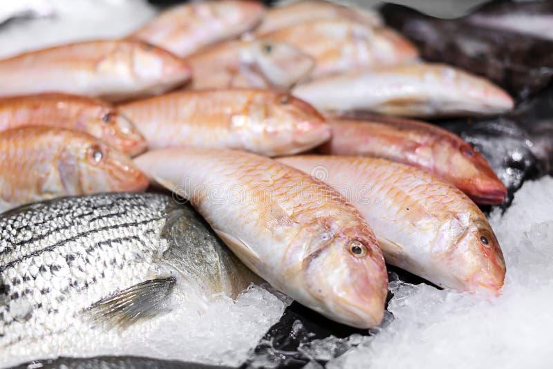 Contatore con i pesci freschi in ghiaccio immagini stock libere da diritti