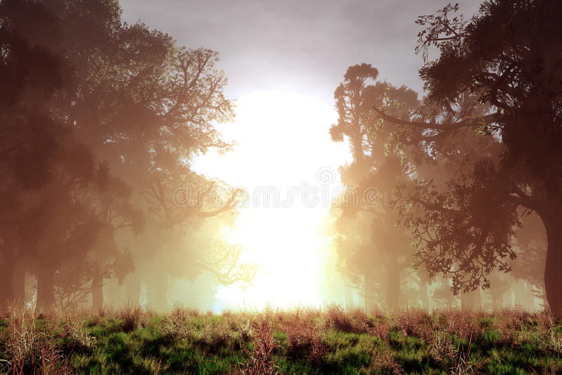 Conte de fées Forest Sunset Sunrise d'imagination magique mystérieuse illustration stock