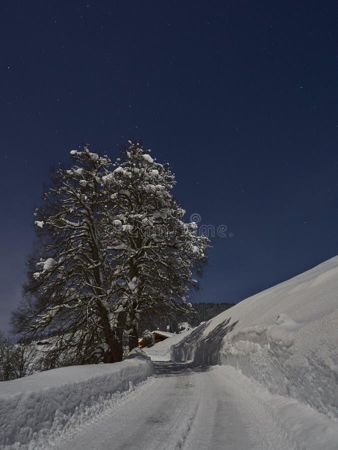 Conte de fées de nuit d'hiver de pleine lune, un coverd d'arbre avec la neige a le côté de la route image stock