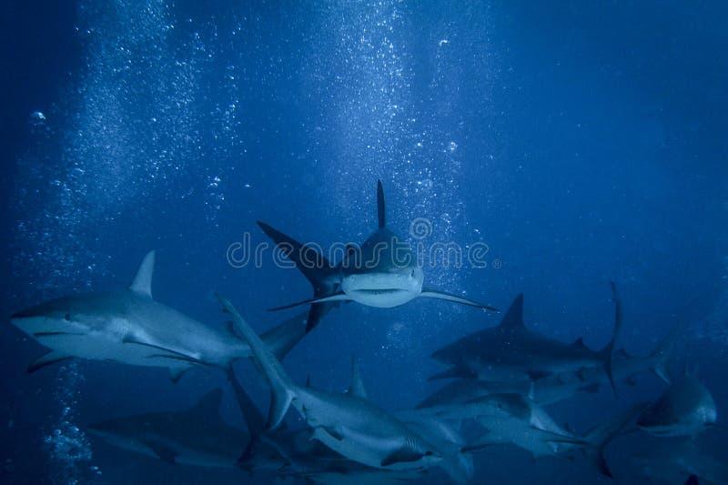 Conte de requin photos stock