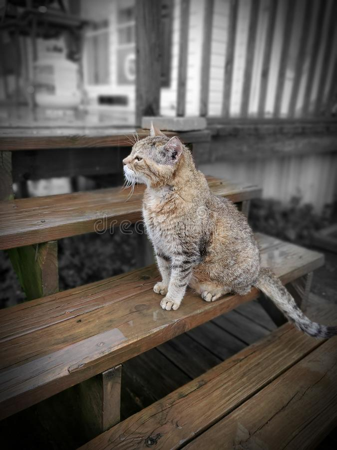Contemplando a vida imagem de stock
