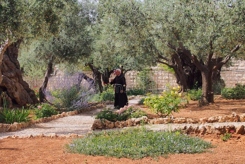 Contemplative Monk, Garden at Gethsemane, Jerusalem,. A black robed contemplative monk standing in the Garden at Gethsemane Greek royalty free stock photo