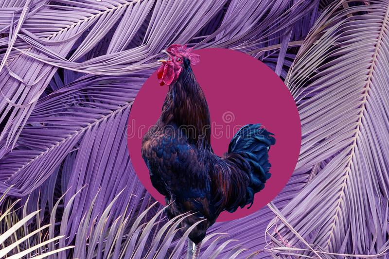 Contemporary art collage singing cock in purple big palm leaves background . Modern style pop art zine culture concept.  stock images