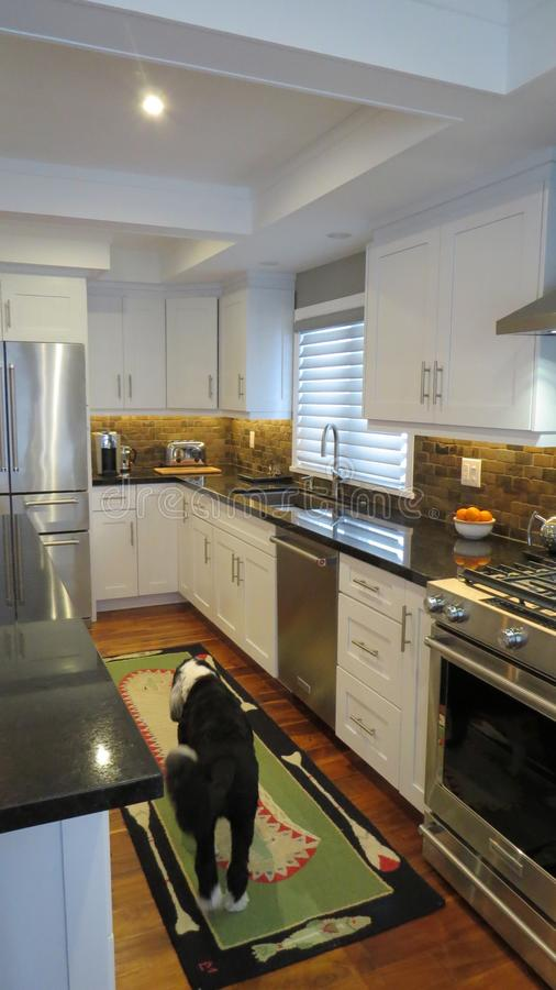 Contemporary kitchen interior with dog and rug royalty free stock photos