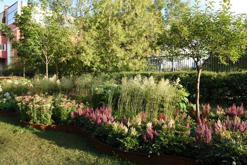 Contemporary wildlife style postindustrial garden design. Making with grass perennial blocks of stonecrop and astilbe in the shad of young birch trees stock photography