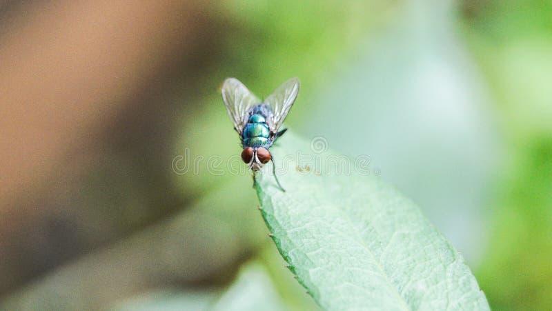 Contenga la mosca foto de archivo libre de regalías