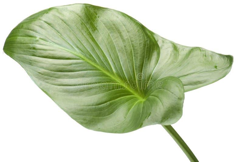 Contenga la planta en blanco fotos de archivo libres de regalías