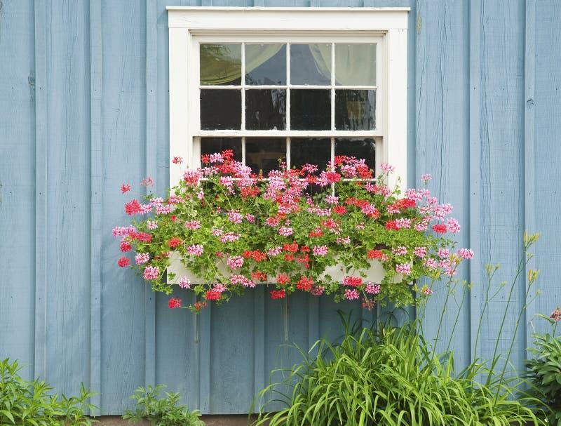 Contenitore di fiore della finestra immagine stock libera da diritti