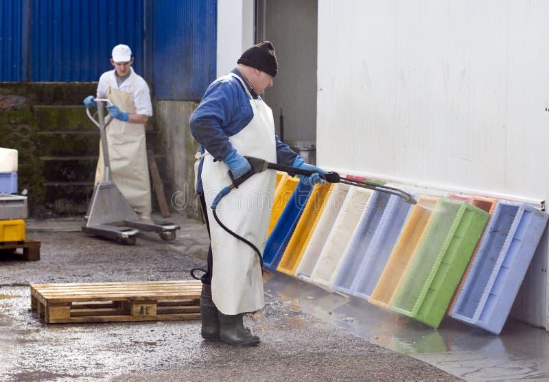 Contenitori dei pesci di pulizia fotografia stock libera da diritti