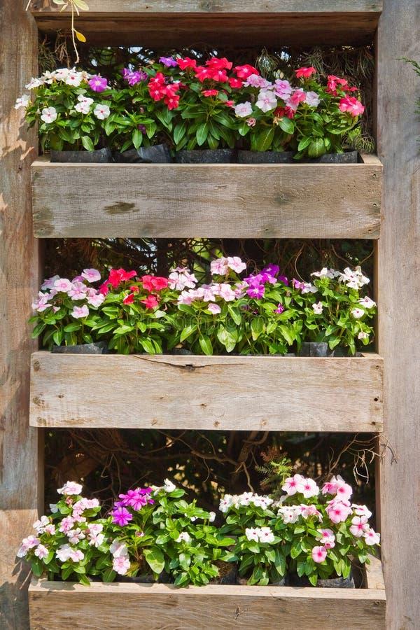 Contenitori di fiore fotografia stock