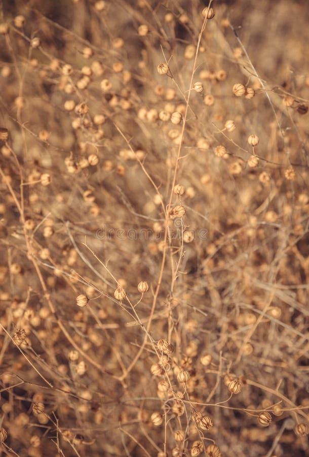 Contesto asciutto della flora fotografie stock libere da diritti