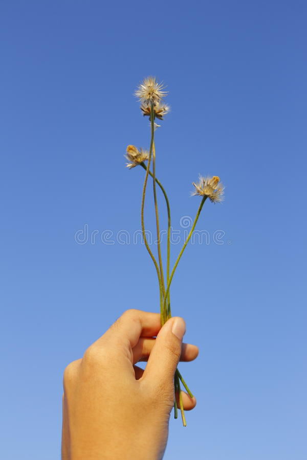 Contesto del cielo blu del fiore fotografia stock