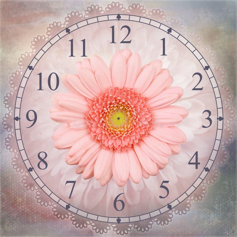 Contesto dell'orologio isolato fiore rosa della gerbera illustrazione di stock