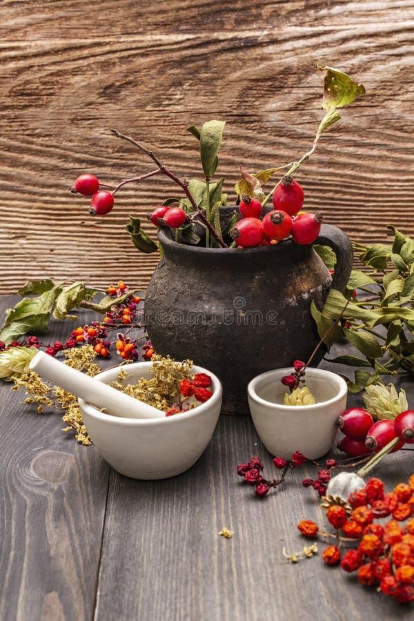 Contesto di Halloween Witch Bowler, mignolo, mirtillo Erbe secche, fiori, bacche fresche fotografie stock