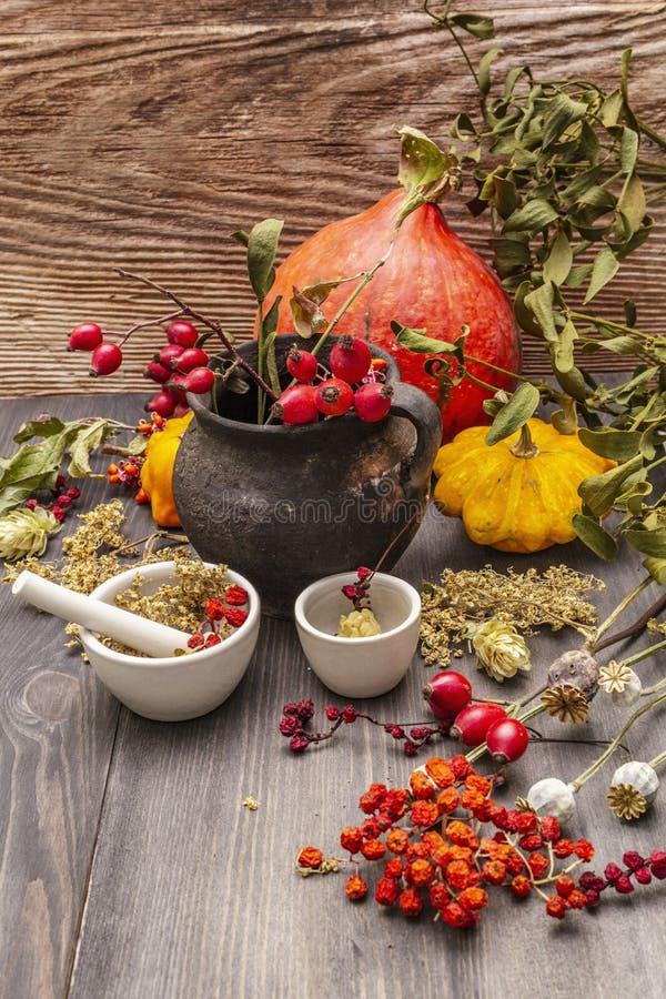 Contesto di Halloween Witch Bowler, mignolo, mirtillo Erbe secche, fiori, bacche fresche immagini stock libere da diritti
