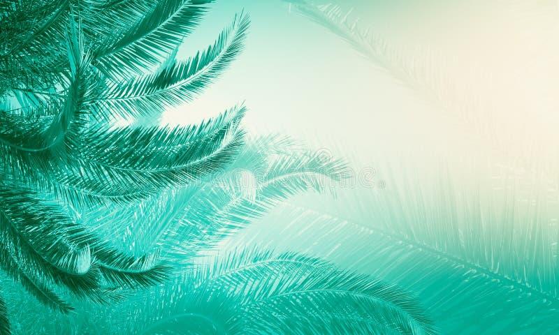 Contexte créatif de palmier image stock